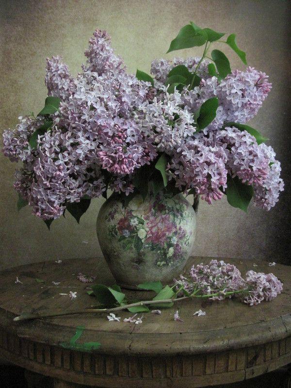 цветы, букет, сирень Классика жанраphoto preview