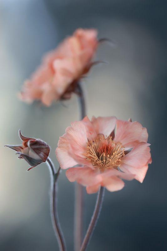 Springtimephoto preview
