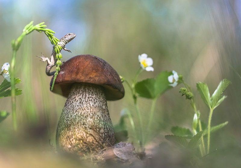Весна-это новая жизнь.photo preview