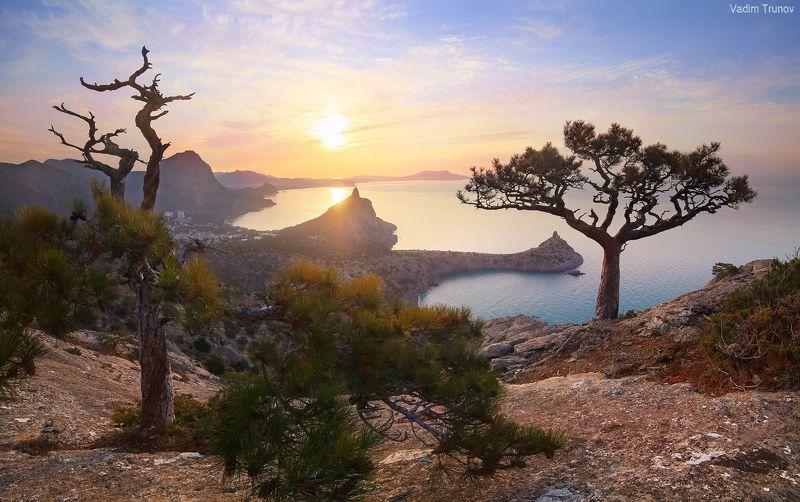 крым, новый свет Крымские сосны Нового Светаphoto preview