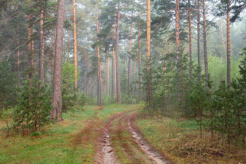май серково рассвет туман лес тропинка Тихое утроphoto preview
