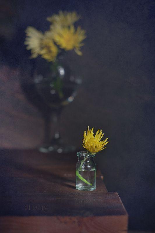 хризантемы Ноябрьский этюдphoto preview