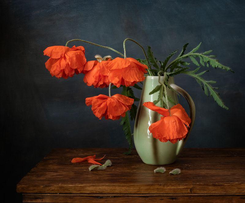 натюрморт, цветы, маки Макиphoto preview