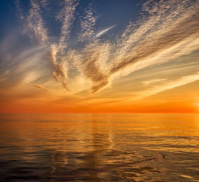закат, отражение, охотское море, чайка навстречу закатуphoto preview