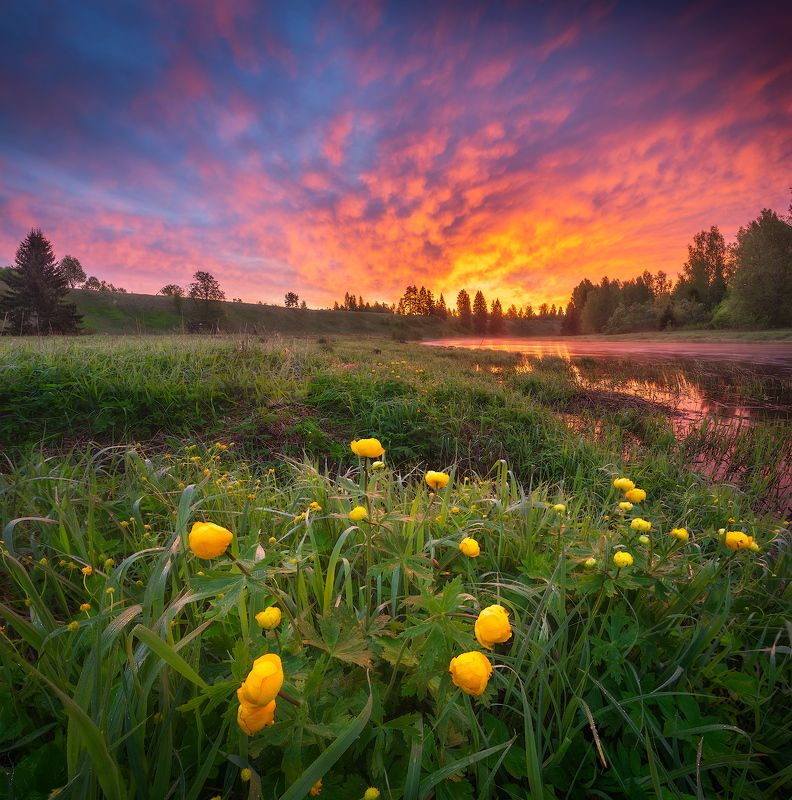 ленобласть, весна, река, рассвет, цветы ***photo preview