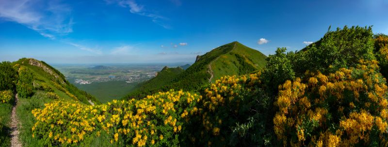 бештау,май,рододендрон,панорама,кмв,природа,пейзаж Золотые цветы горного маяphoto preview