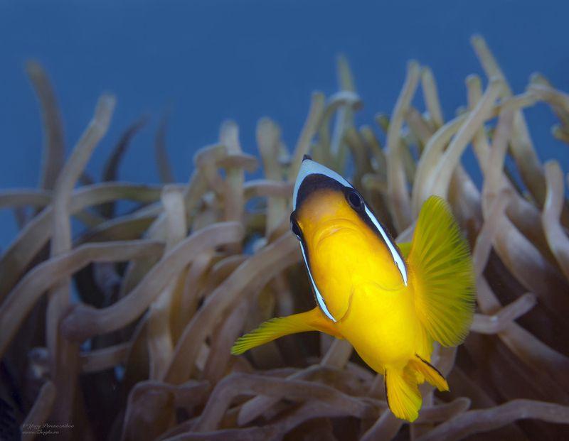 подводное фото подводный мир хургада египет жогло zhoglo красное море Вам туда фото превью
