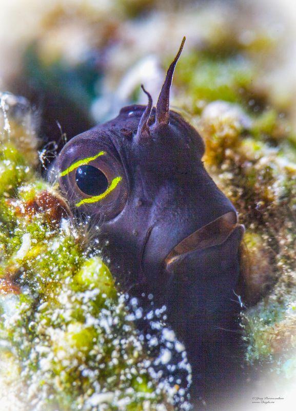 подводное фото подводный мир хургада египет жогло zhoglo красное море Рогатый фото превью