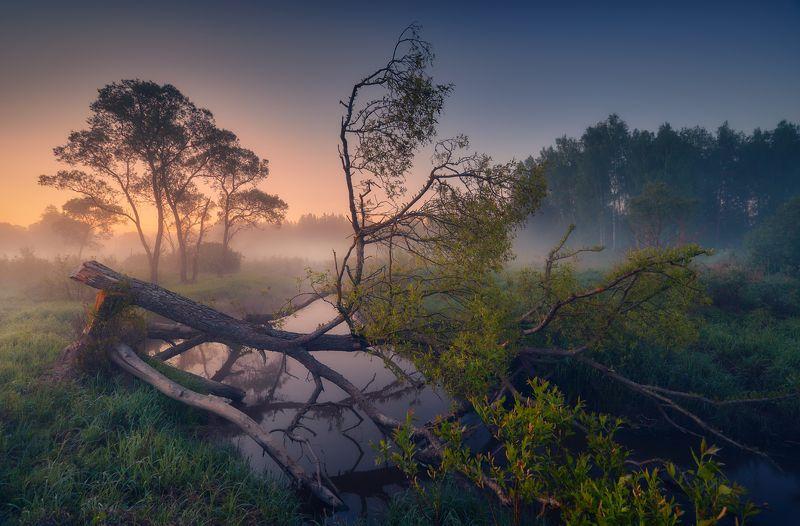 владимирская область,природа, пейзаж, май, весна Канувшее ... фото превью
