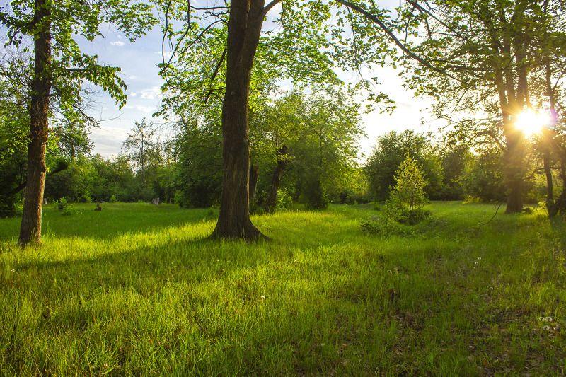 пейзаж, природа, лес, деревья, трава, солнце, утро, Утроphoto preview