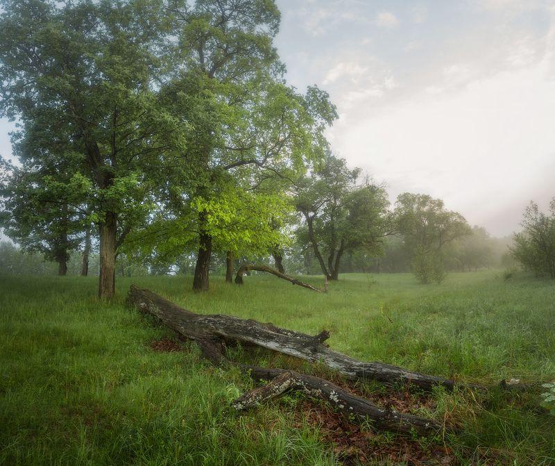 пейзаж природа деревья утро трава *** фото превью