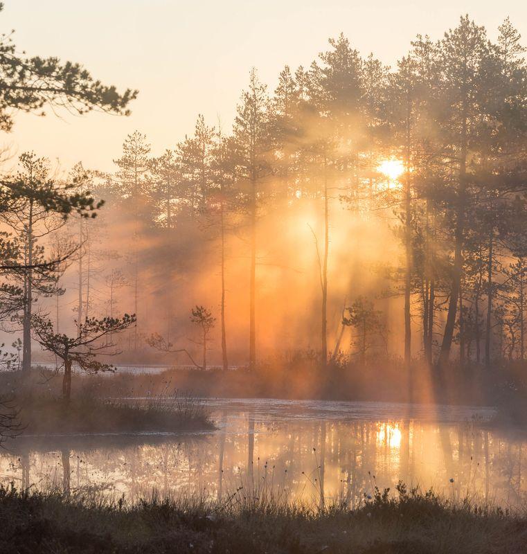 болото, кайф, рассвет ,север ,солнце, свет, закат, облака, отражение, фототур Магия света в царстве рассветаphoto preview