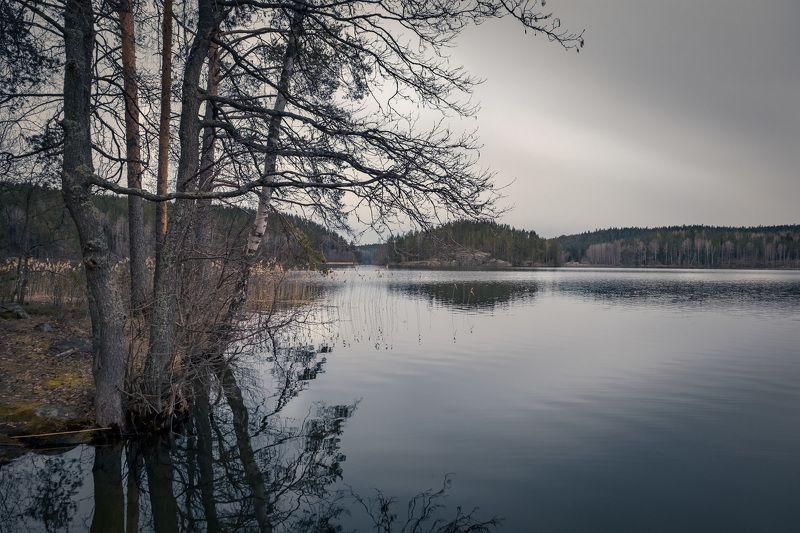 карелия, озеро, остров, кортеланъярви, скала, сосна, лес, облака, пейзаж, природа Пасмурный вечерphoto preview