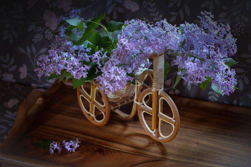 Я буду долго гнать велосипедphoto preview