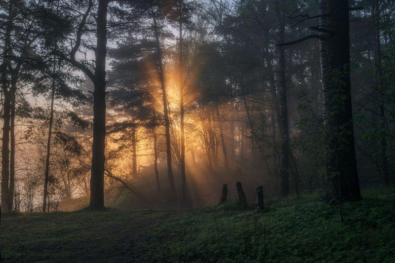 туман, рассвет, лес, природа, пейзаж, Московская область Майское утроphoto preview