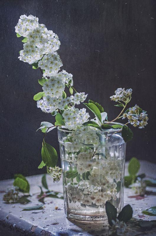 веточка спиреи ,весна,стакан,старый стул,текстура Веточка Спиреиphoto preview