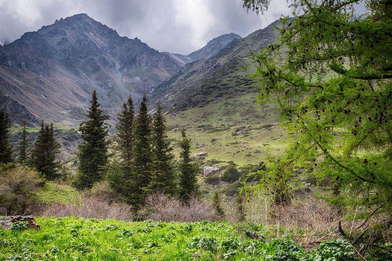 кыргызстан, горы Весенний наряд для лиственницыphoto preview