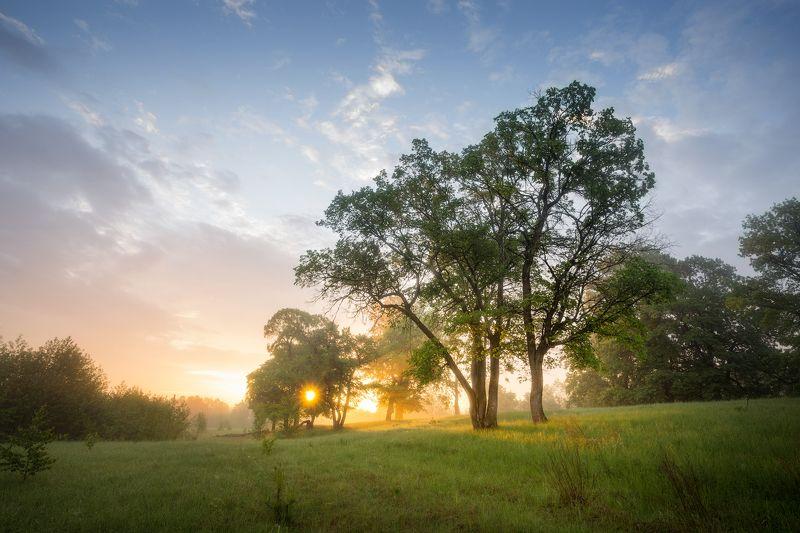 природа утро туман деревья *** фото превью