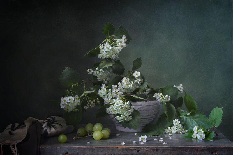 натюрморт, цветение, весна, боярышник photo preview