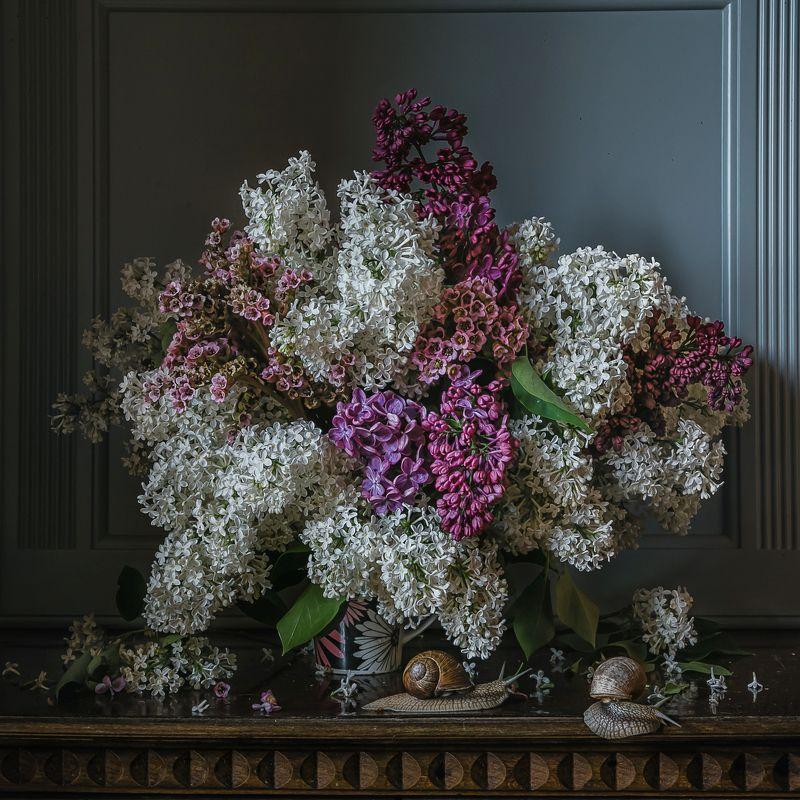 натюрморт, цветы, сирень, улитки Сирень и улиткиphoto preview