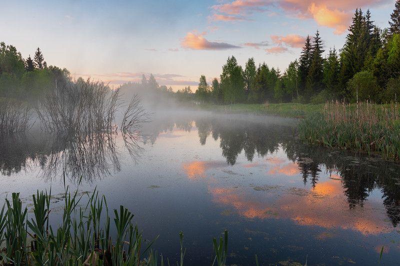 Лесной прудик.photo preview