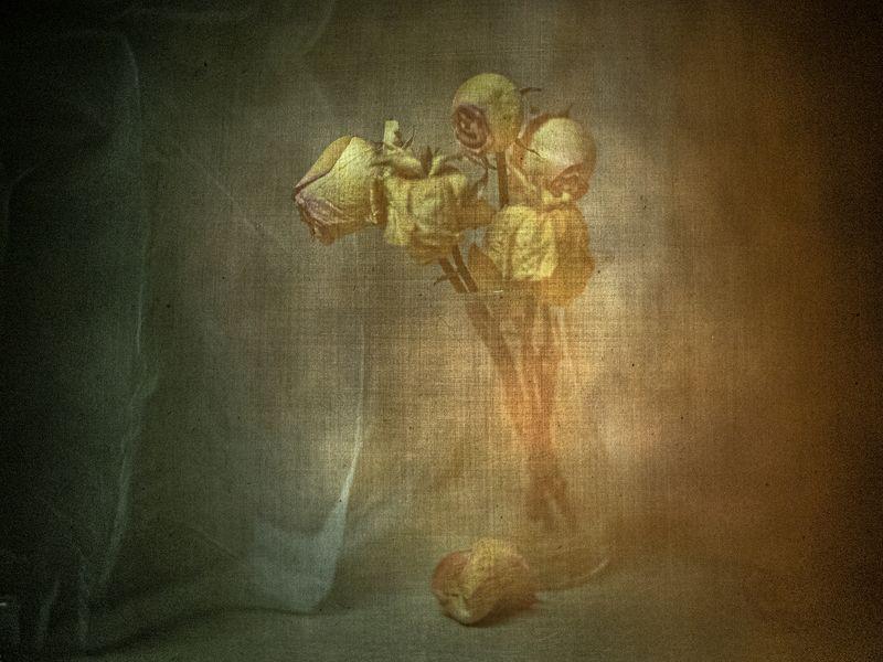 #haruhisa А розы так красиво догорают...photo preview