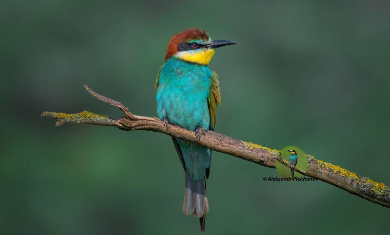 wildlife Wildlifephoto preview