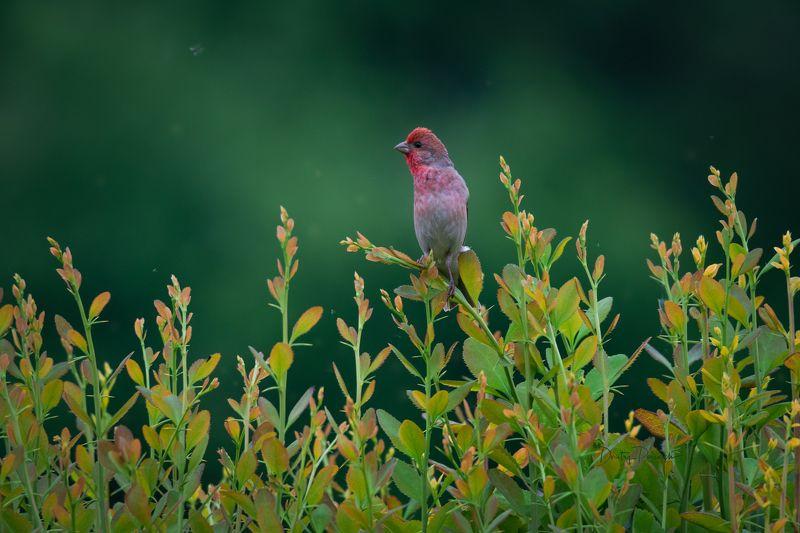 природа, лес, поля, огороды, животные, птицы, макро Вот и лето пришлоphoto preview