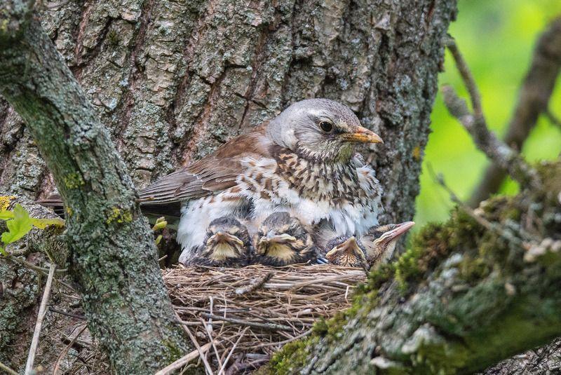 птица дрозд весна С Днём защиты детейphoto preview