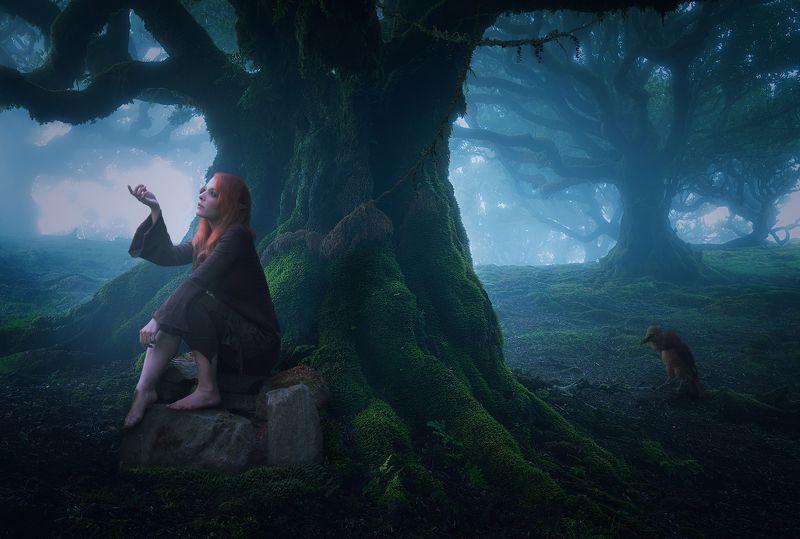 девушка, лес Эльфийка фото превью
