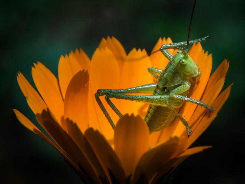 Green in orangephoto preview