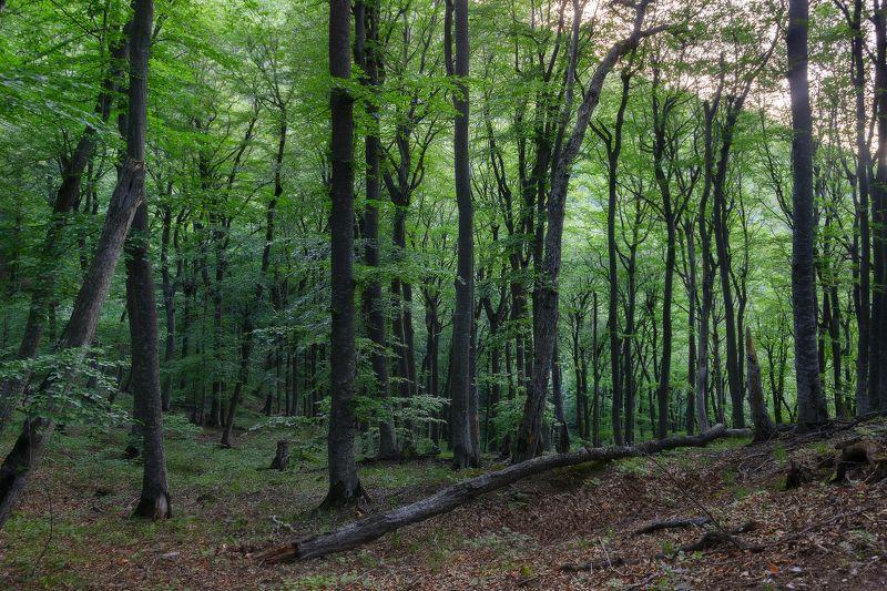лес,лето,буки,пейзаж,природа В чаще букового лесаphoto preview