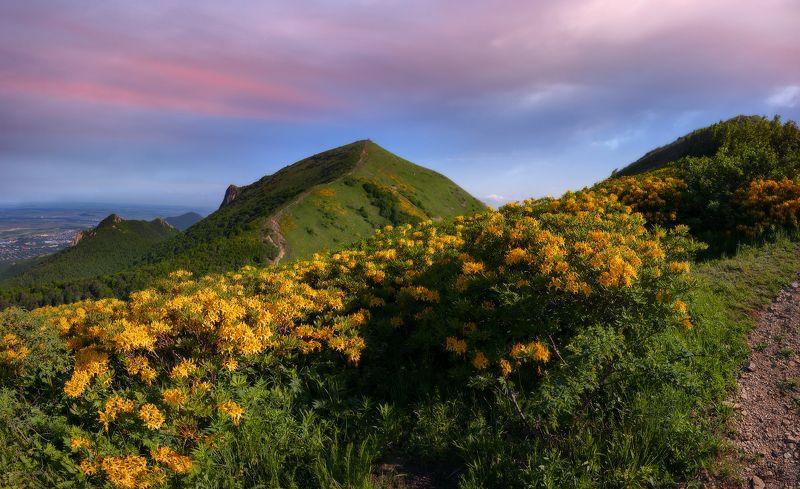 бештау,рододендрон,закат,май, природа,пейзаж,кмв Предзакатнаяphoto preview