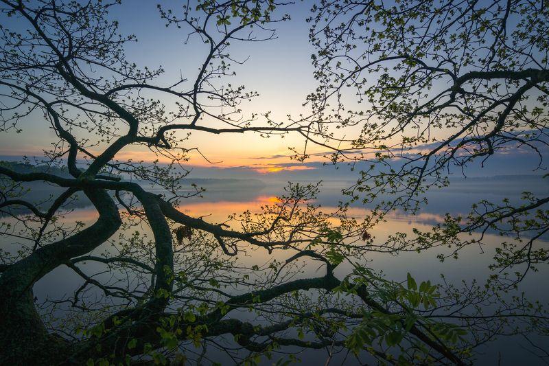 туман, московская область, утро, природа, пейзаж, весна, рассвет, солнце Тянется к солнцуphoto preview