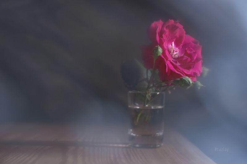 розы Я тоже про розочку...photo preview