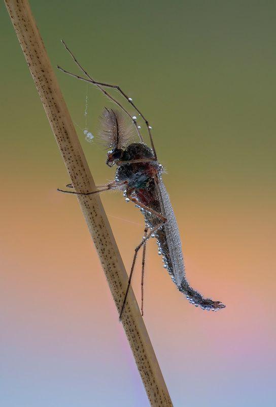В комарином царствеphoto preview