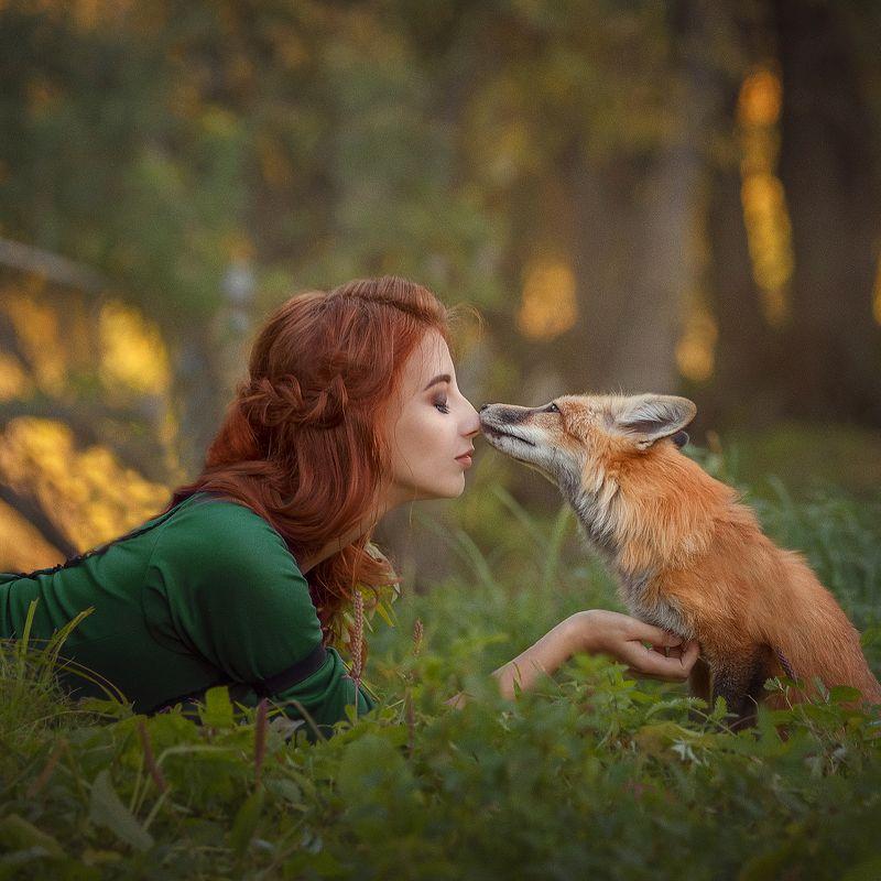 Foxes фото превью