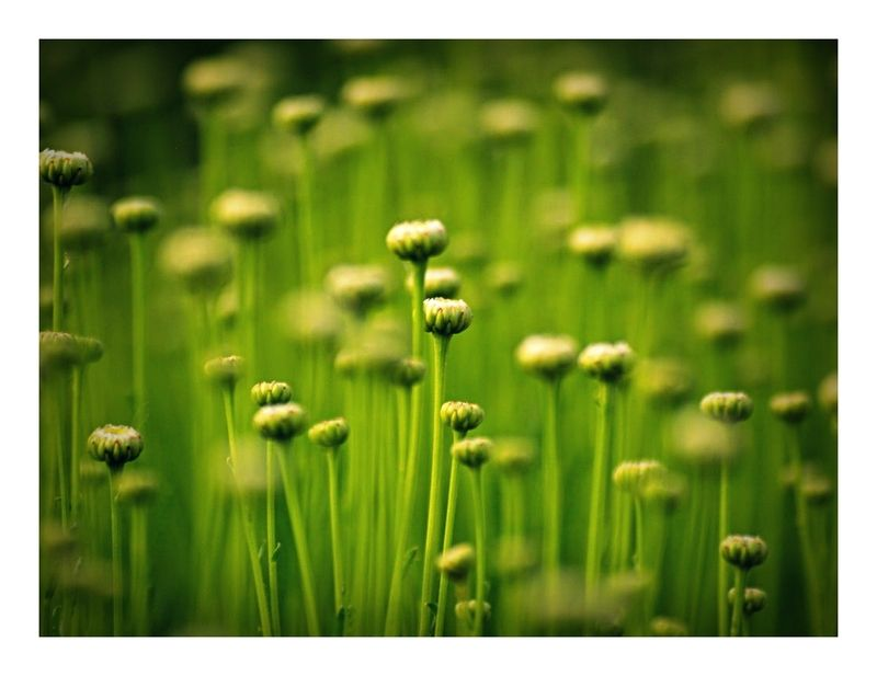 Greenphoto preview