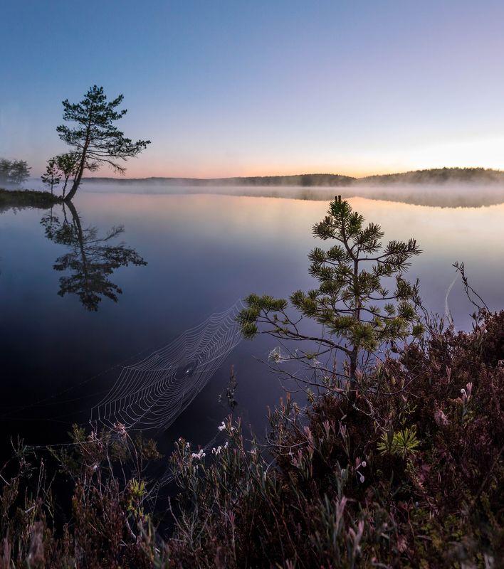 болото, кайф, рассвет ,север ,солнце, свет, закат, облака, отражение, фототур За час до восходаphoto preview
