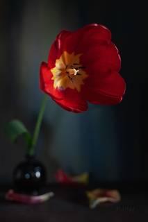 Про пузырёк с тюльпаном