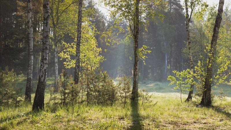 лес весна май Майское утроphoto preview