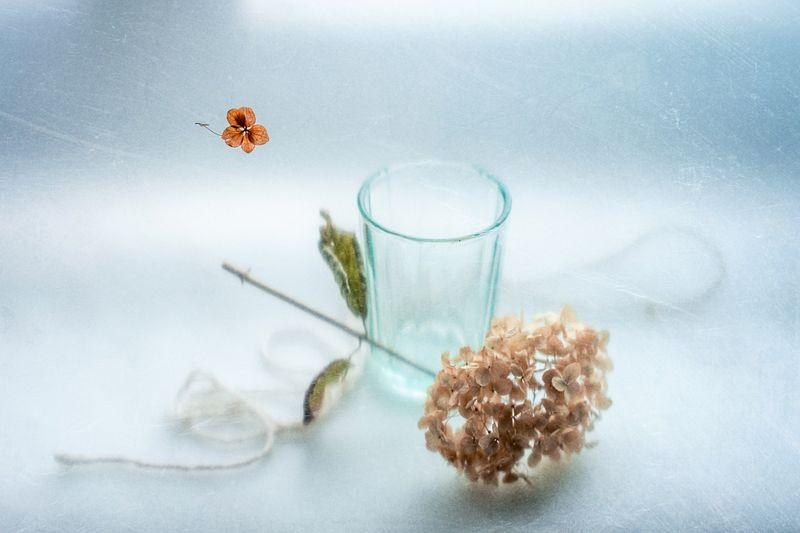 натюрморт, весна, гортензия, веточка, цветок, оттенок серебра В оттенках серебраphoto preview
