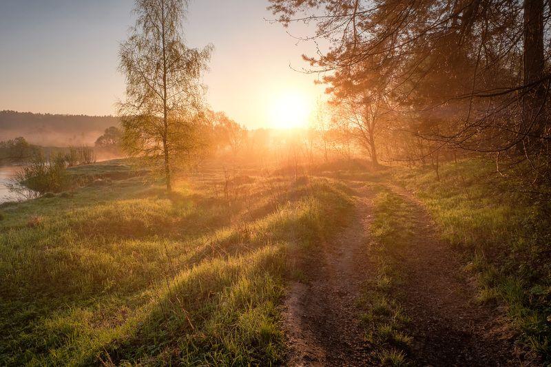 истра, утро, солнце, деревья, зелень, роса, рассвет, река, пейзаж Солнце навстречуphoto preview