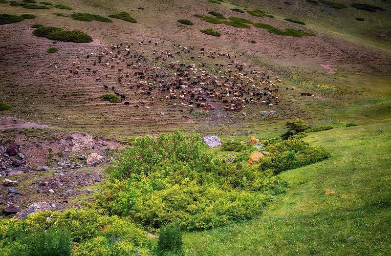 кыргызстан, горы Отражениеphoto preview