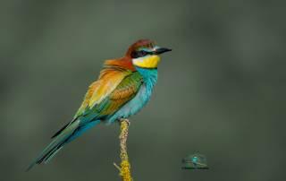 Краски живой природы