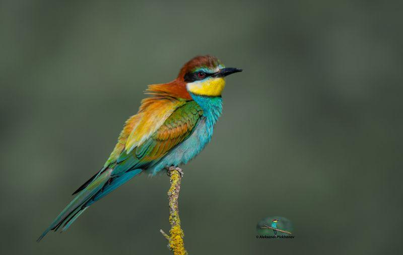 wildlife Краски живой природыphoto preview