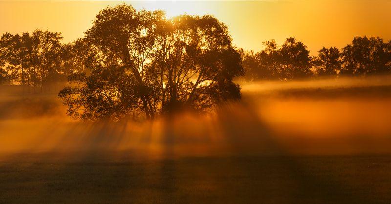 питер, пушкин, царкоесело, царское, пейзаж, природа Царскосельская Африка;)photo preview