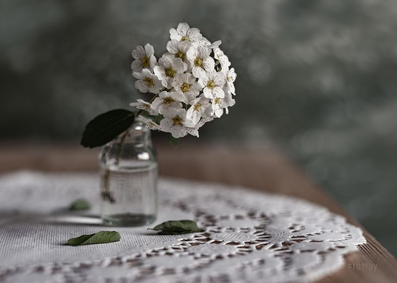 спирея, весна во флаконе, невеста, гелиос 44 И снова про спирею в маленьком флаконеphoto preview