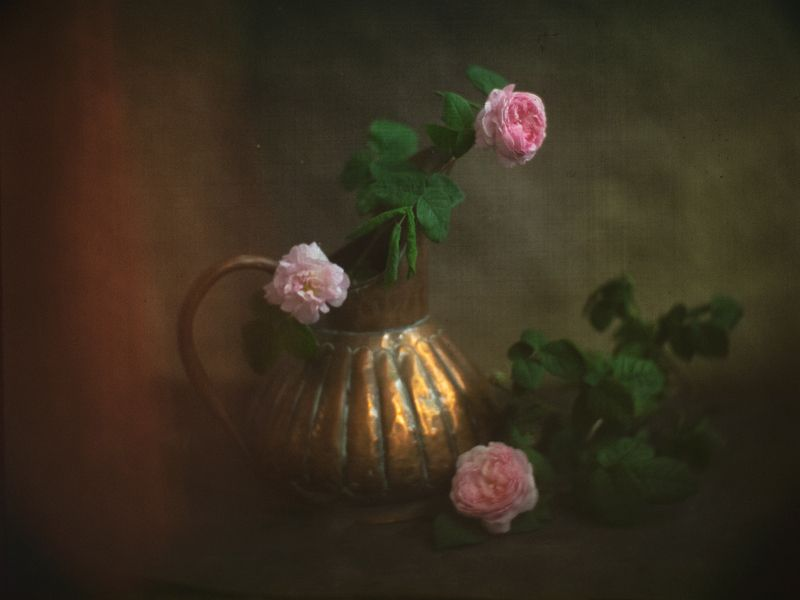 #haruhisa Чайной розы аромат...photo preview