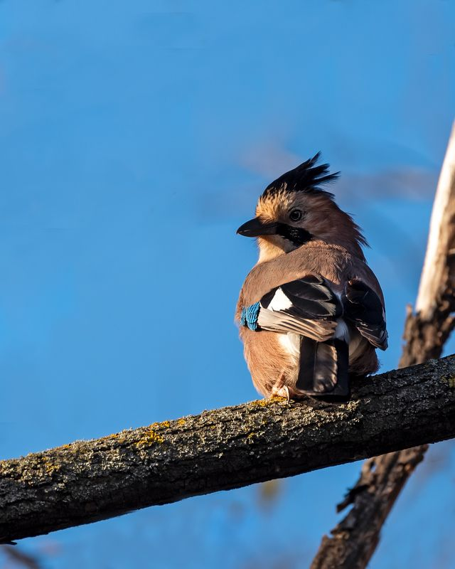 Про птицphoto preview